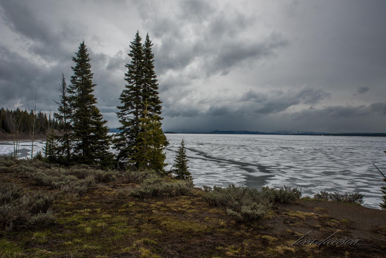 Y Road to Yellowstone TD-1.jpg