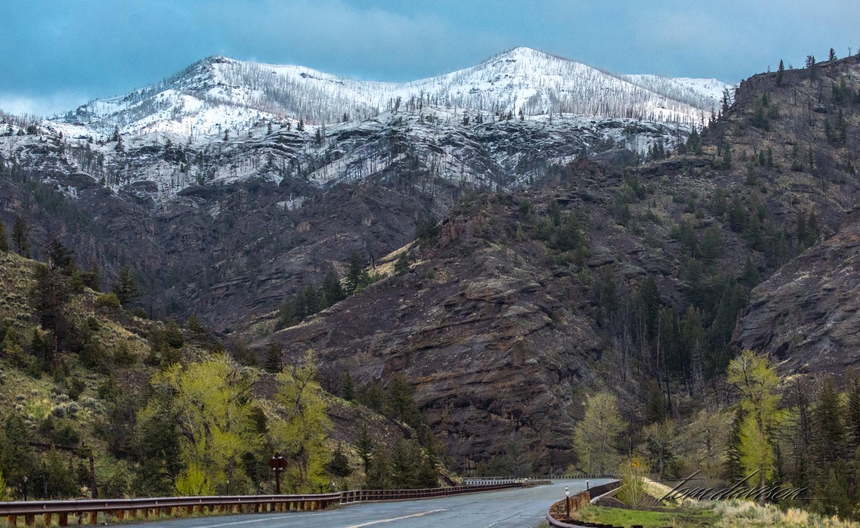 Y Road to Yellowstone TD-3.jpg