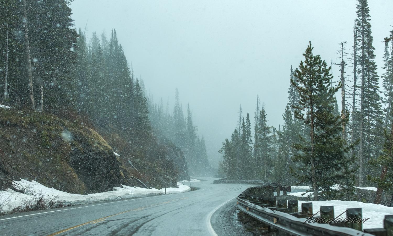 Y Road to Yellowstone TD-9.jpg