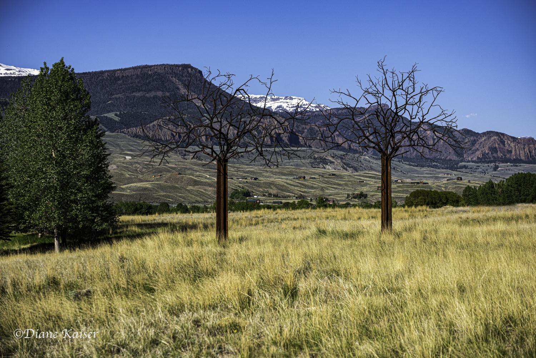 DK Yellowstone-41.jpg