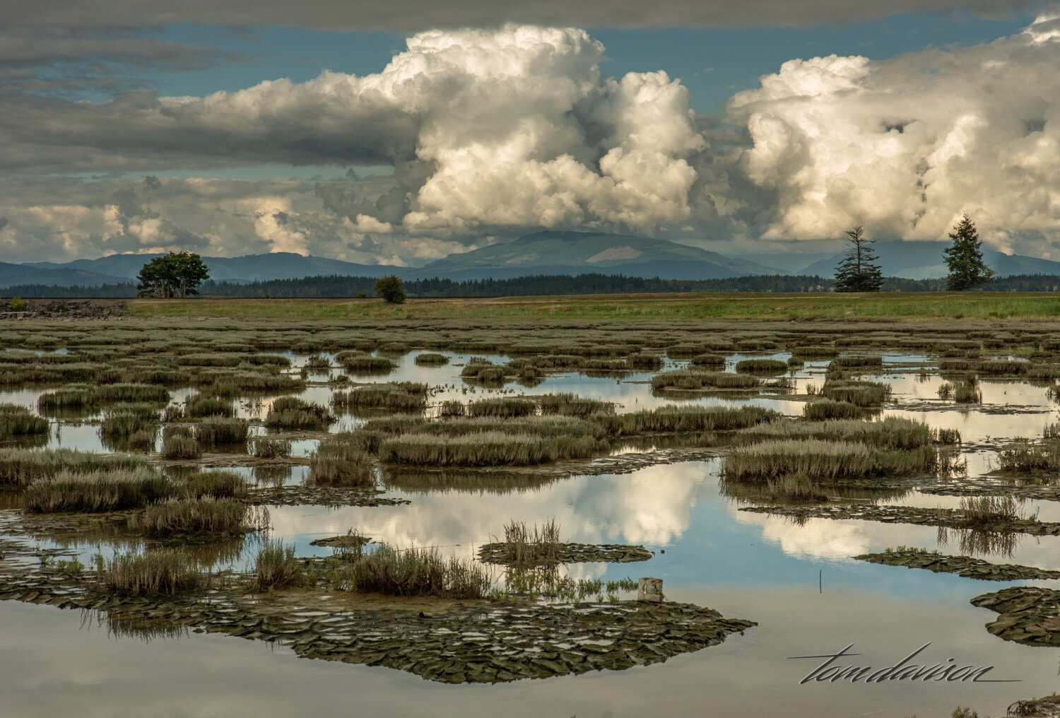 Samish Bay at low tide