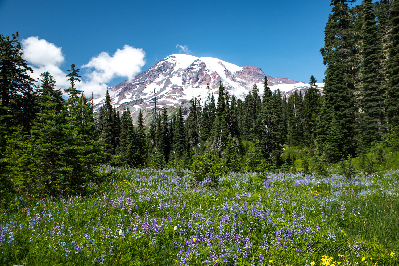 TD Mt Rainier-8.jpg