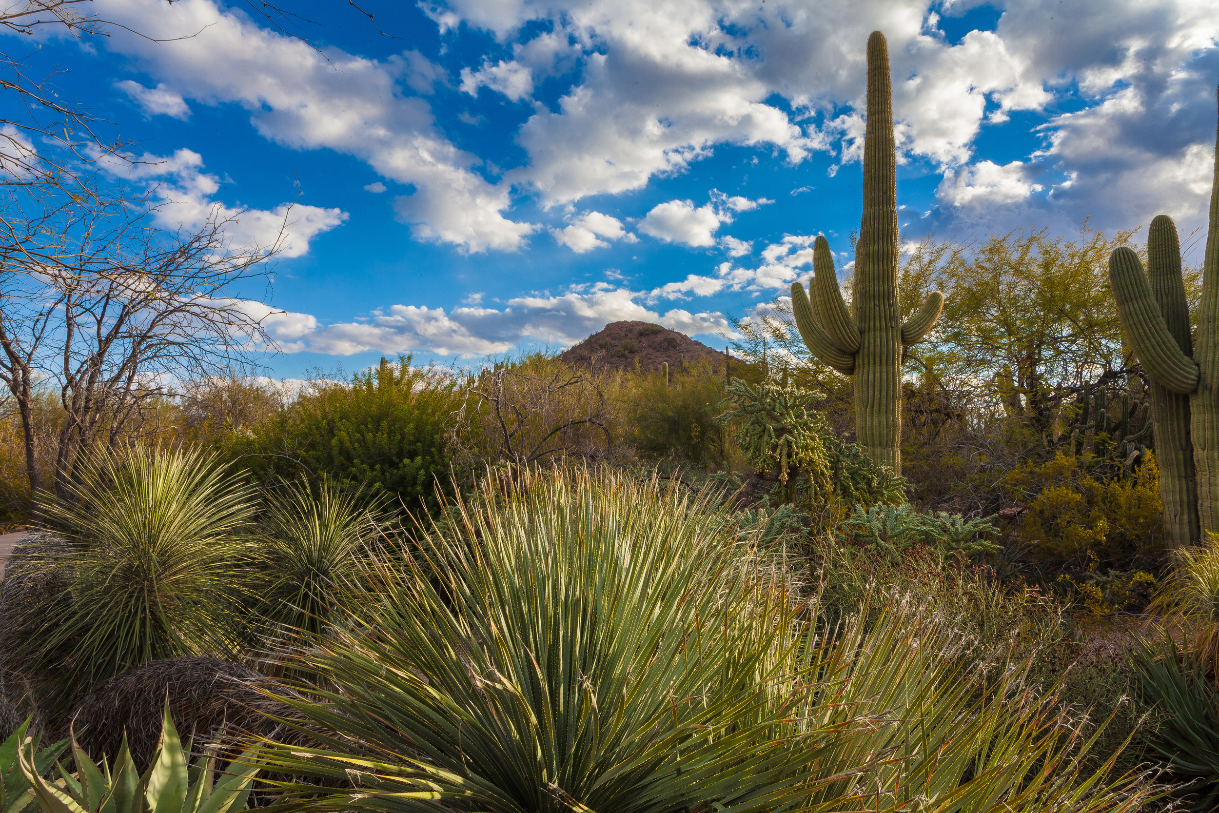 Desert Botanical Garden - Photo by Adam Rodribues