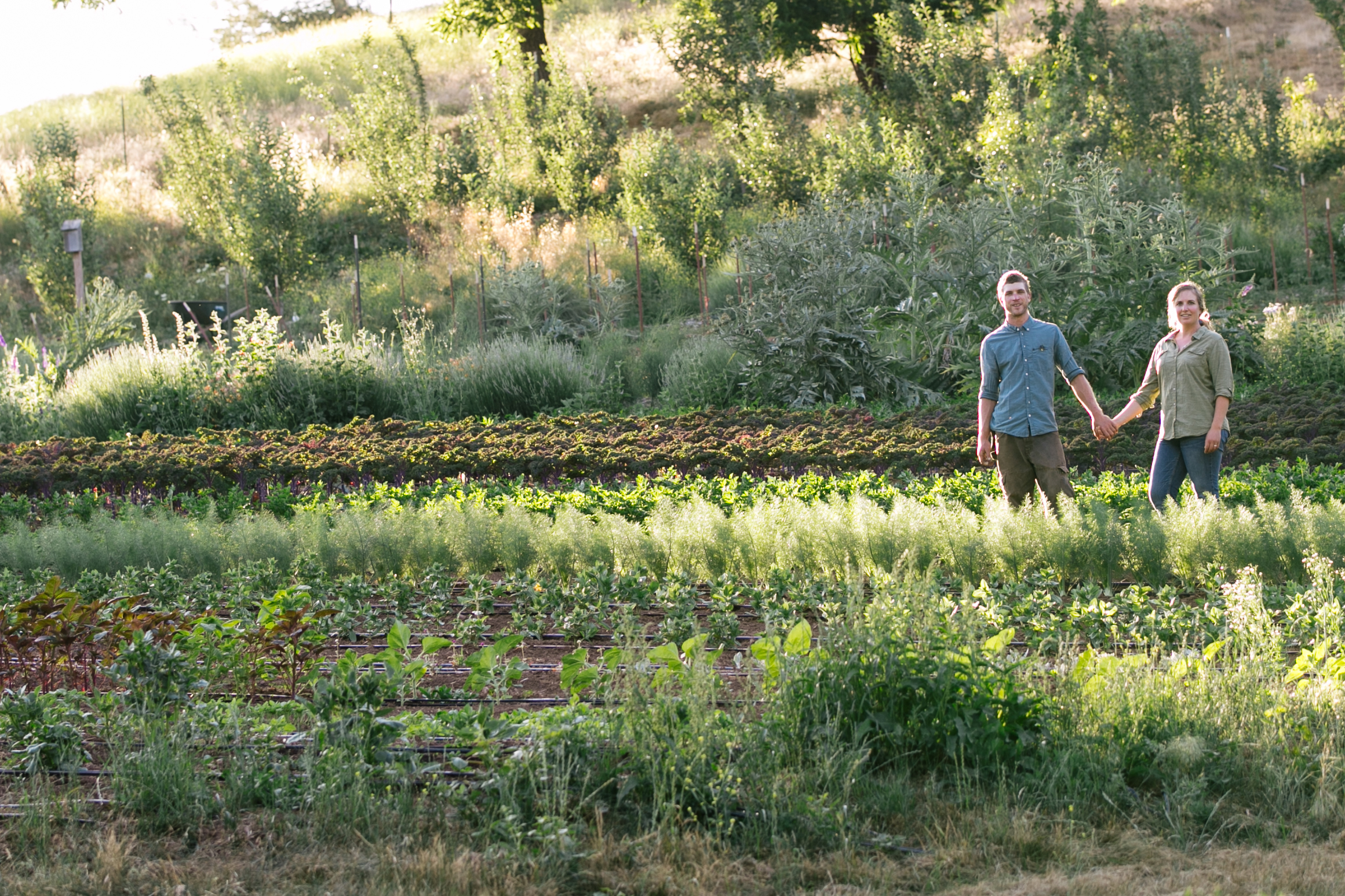 Sweet Roots Farm