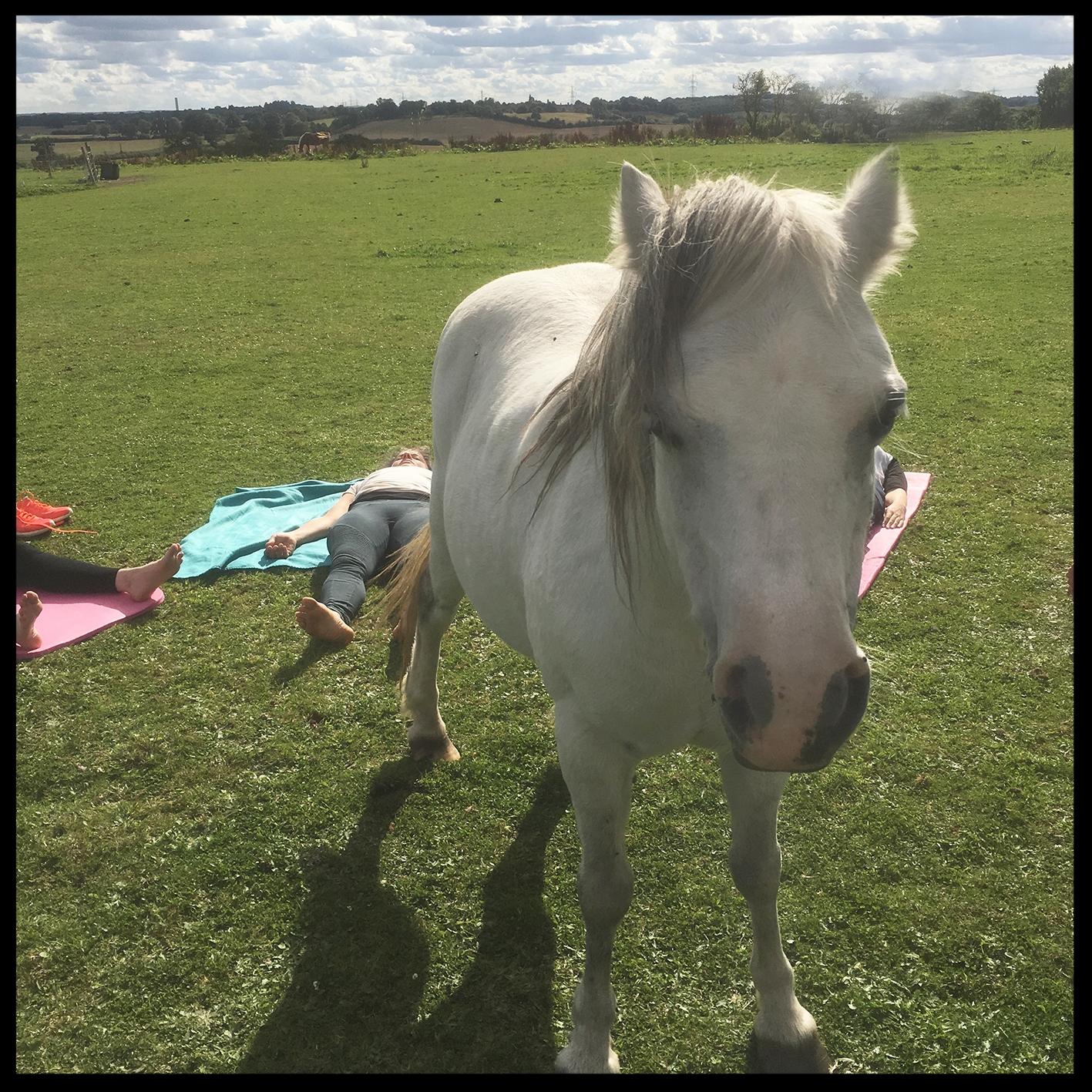 Horsessmall.jpg