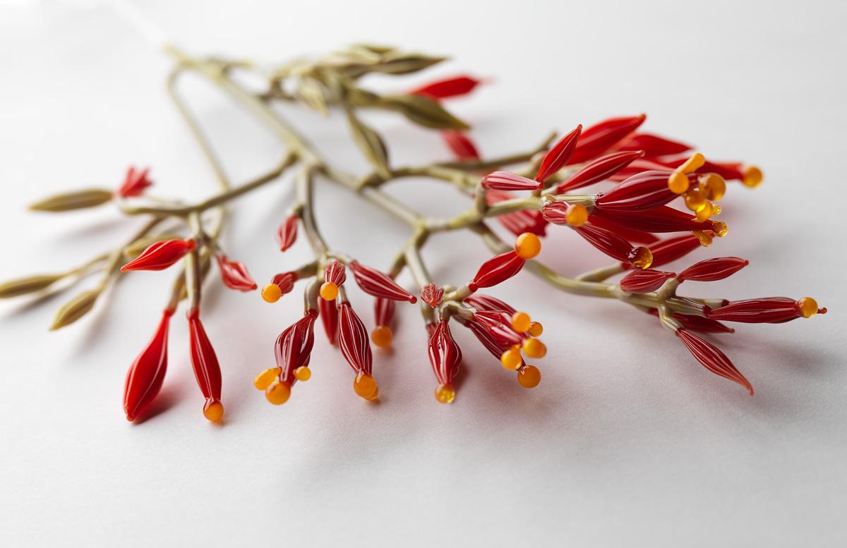 Conceptual Flowering Plant Series,