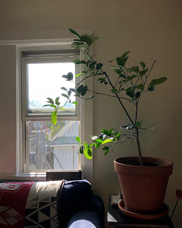 😍😍 tree is so happy in his new home! 🙂🙃🙂