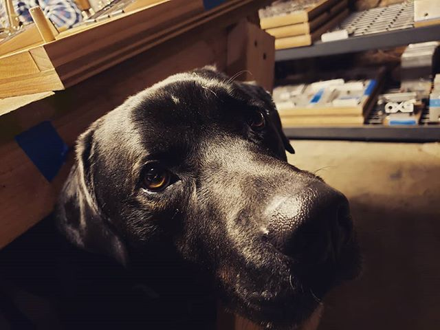 Nikola the #shopdog