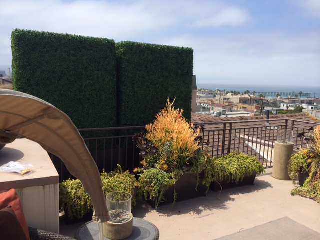 Home in Hermosa Beach with custom hedges designed around existing planters for a break from neighbors.