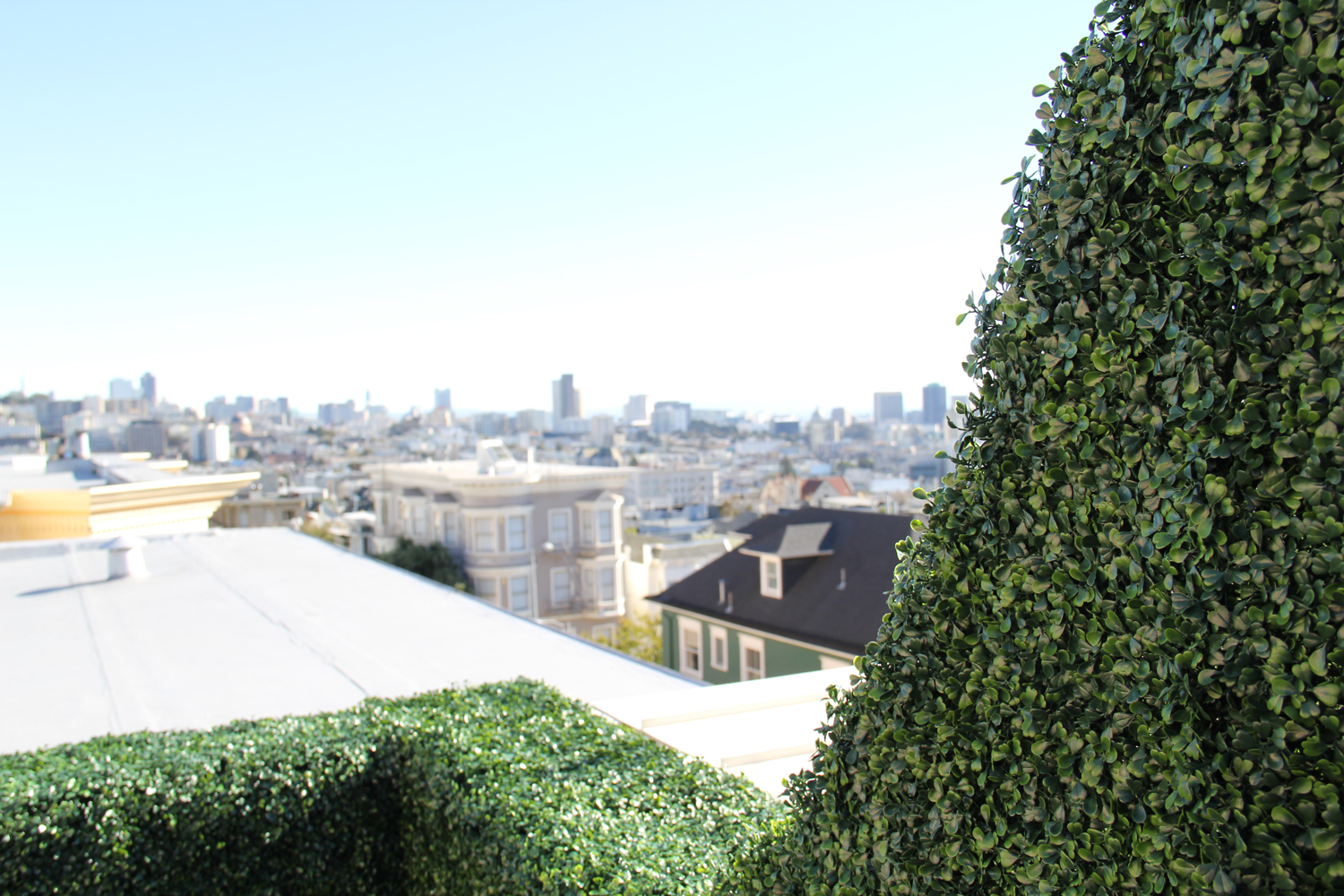 Rooftop hedge panel in San Francisco. We custom created a curve so the hedge did not impede the view of downtown San Francisco.