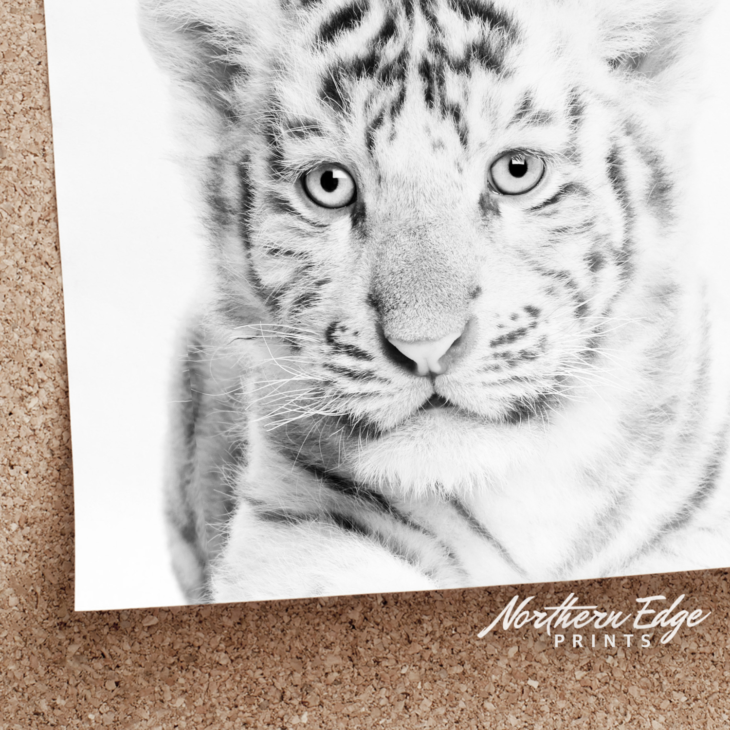 It is a graphic of Old Fashioned Printable Tiger Pictures