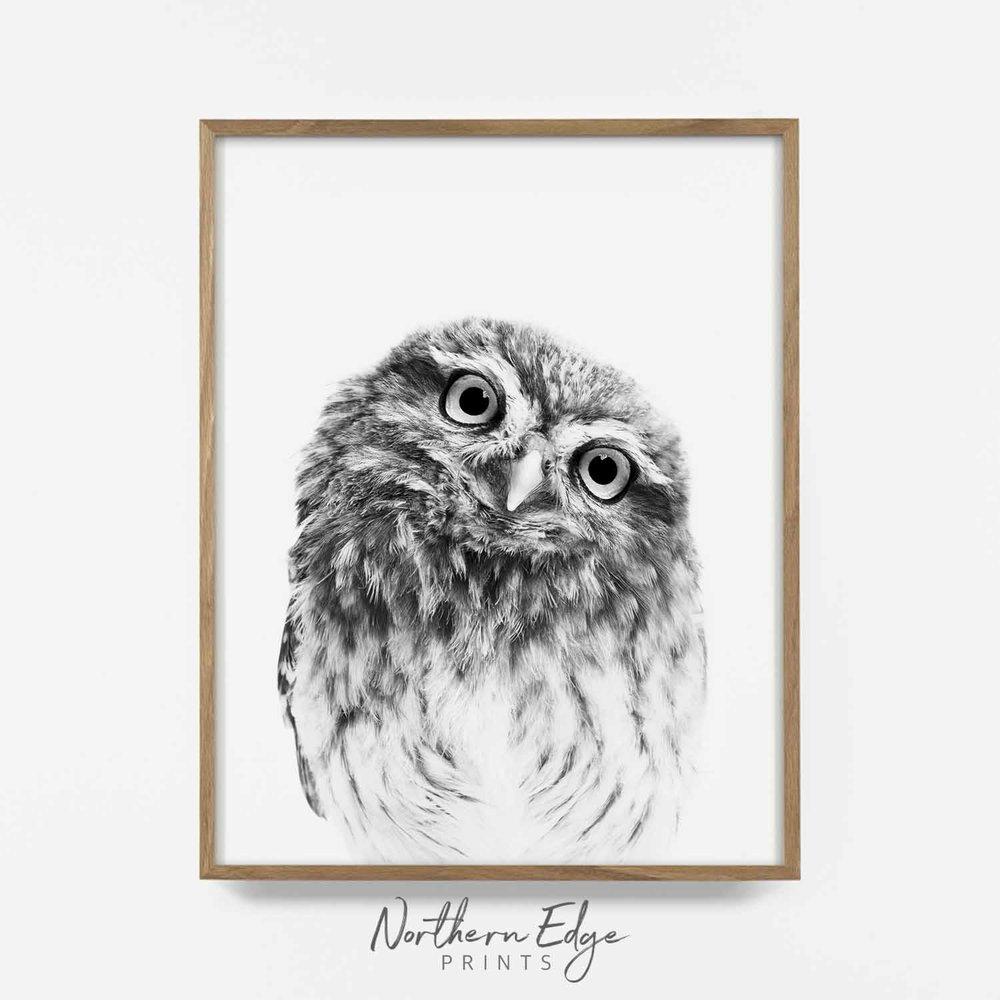 Scandinavian nursery prints printable decor monochrome nursery animal print New Zealand Fantail Illustration instant digital print