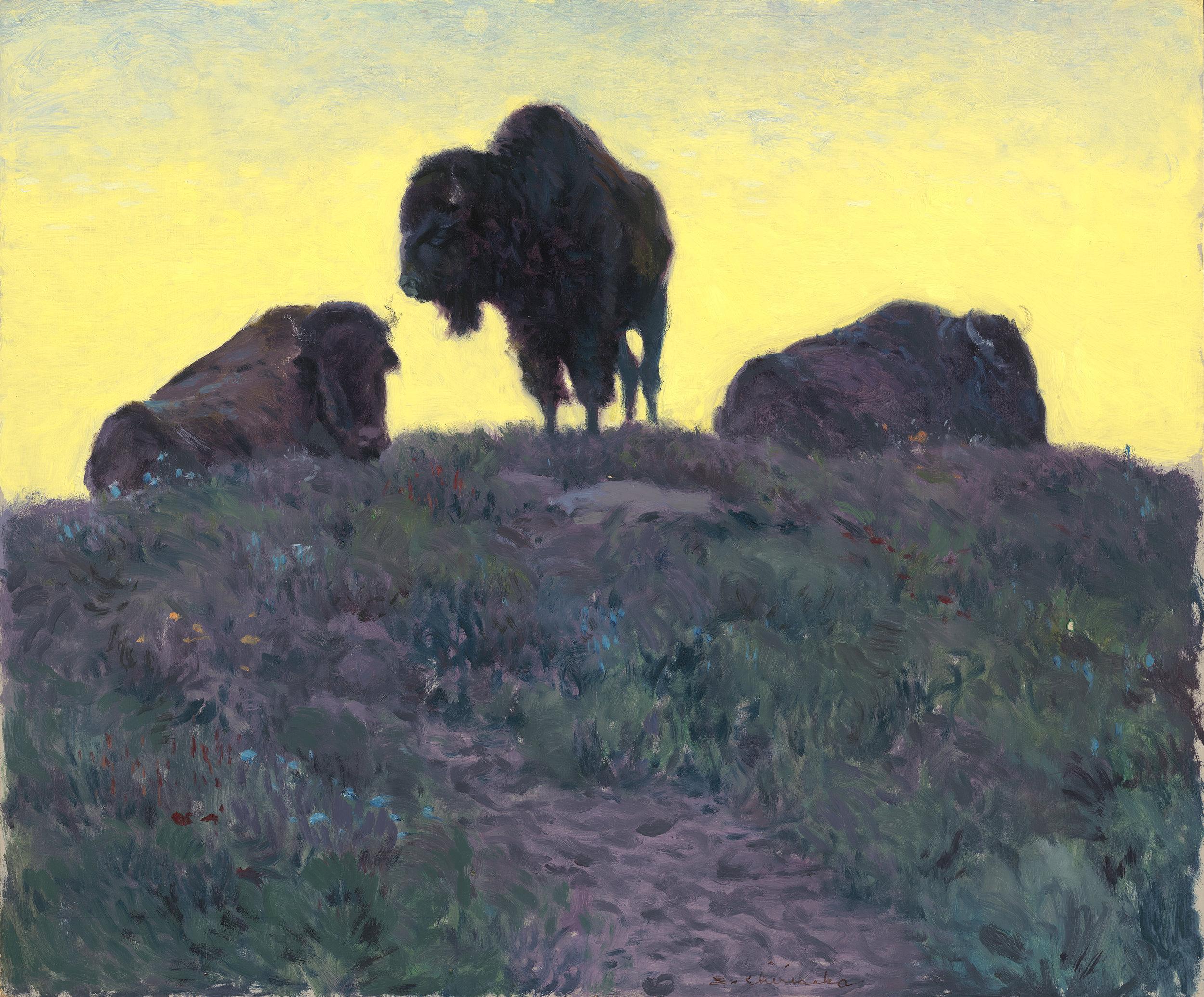 Buffalo at Rest