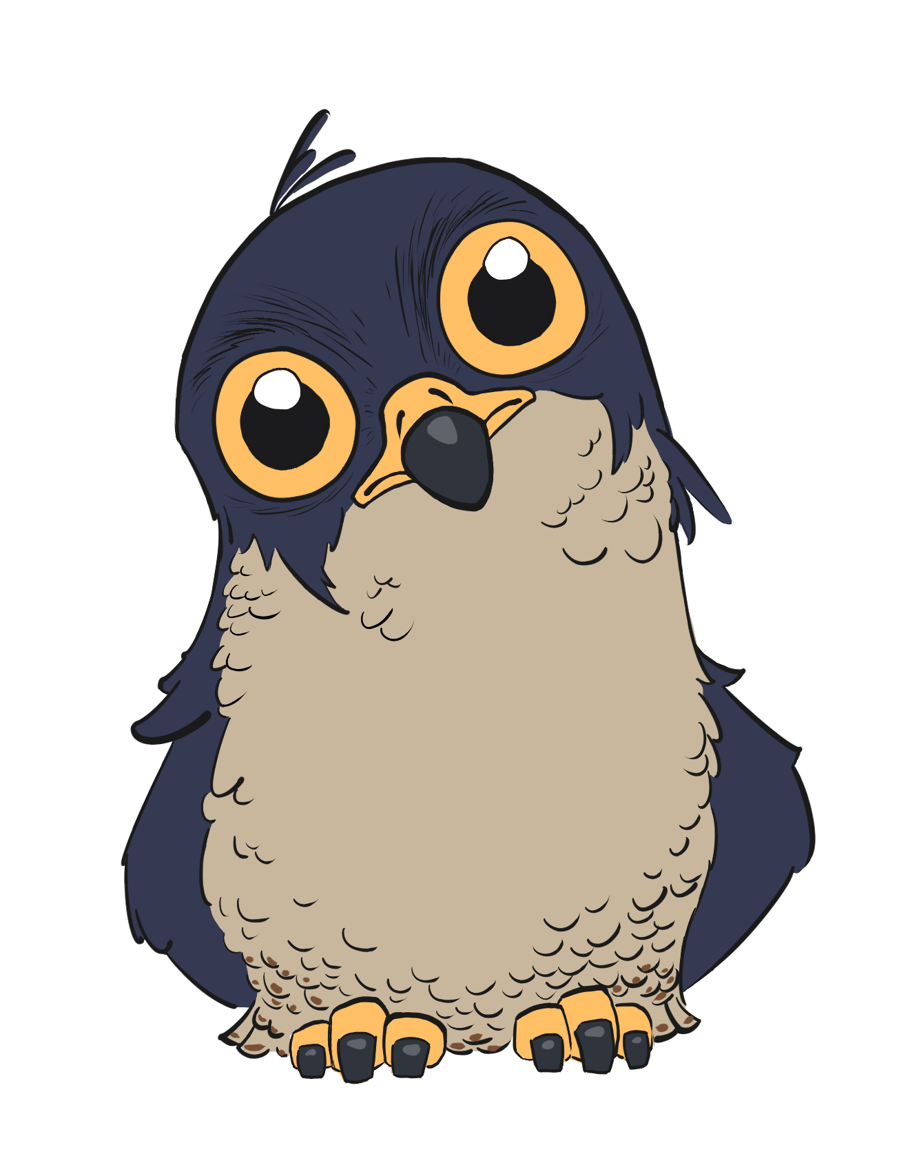Peregrine falcon. The one that started it all! I wanted to draw a falcon that didn't look fierce, and, well.