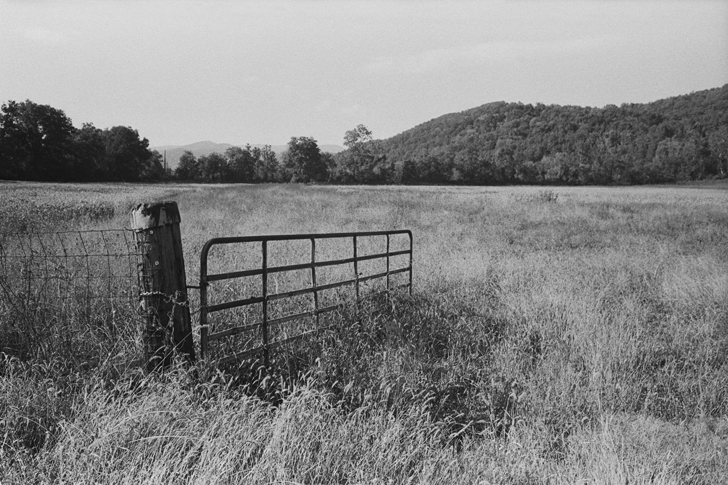 Pasture near Tornton River.  Rappahannock County, Virginia.  2014.