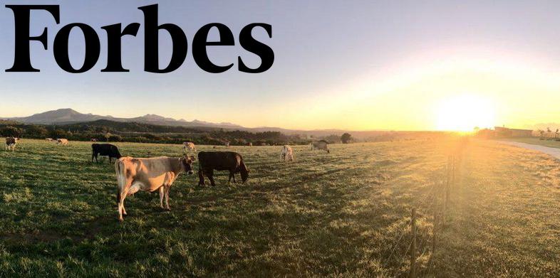 Forbes-image.jpg