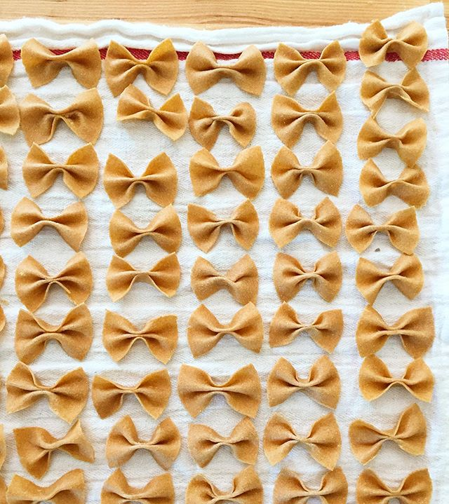 Hand rolled farfalle with sprouted whole wheat flour 💪🏼 Perfect finger food for the little guys. Perfect vehicle for the pesto made with the basil from our little garden.