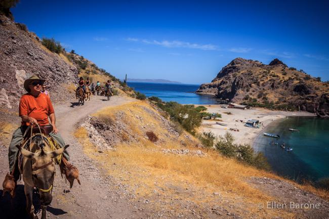 Exploring by mule, Bahia Agua Verde, Sea of Cortés.