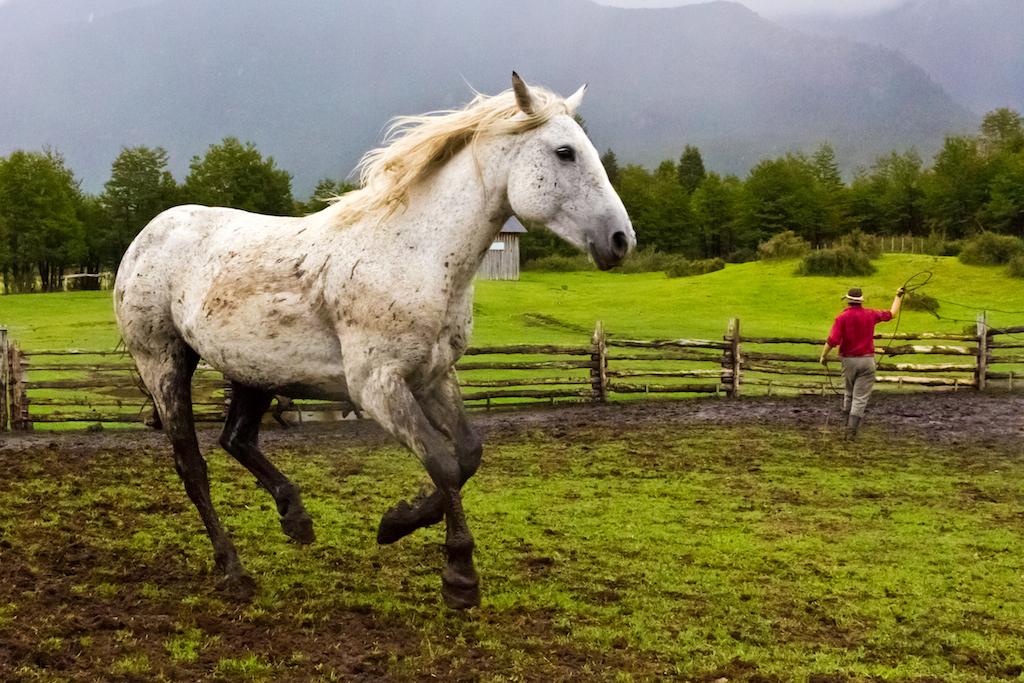 Gaucho with horses, La Estancia, Valle California, Patagonia Sur, Chile, South America