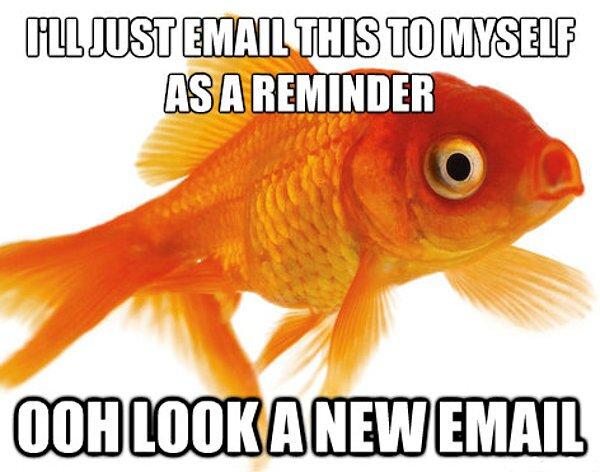 folk_rebellion_goldfish_effect