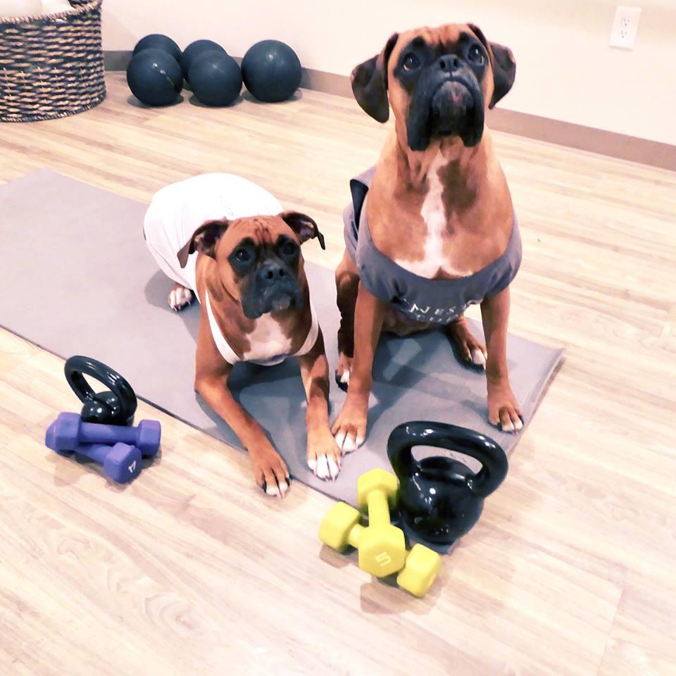 kona and luna working out.jpg