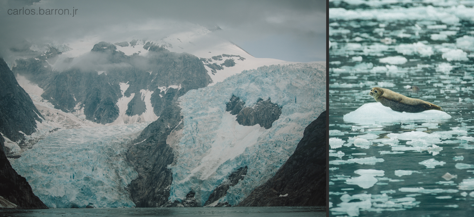 Northwestern Glacier   Sea Lion