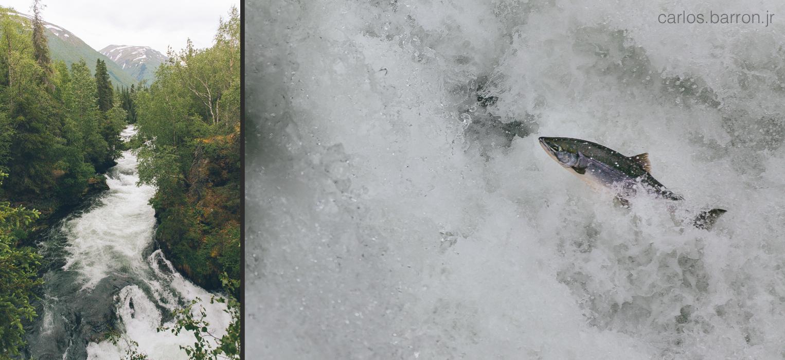 Russian River Falls, Cooper Landing, Alaska.