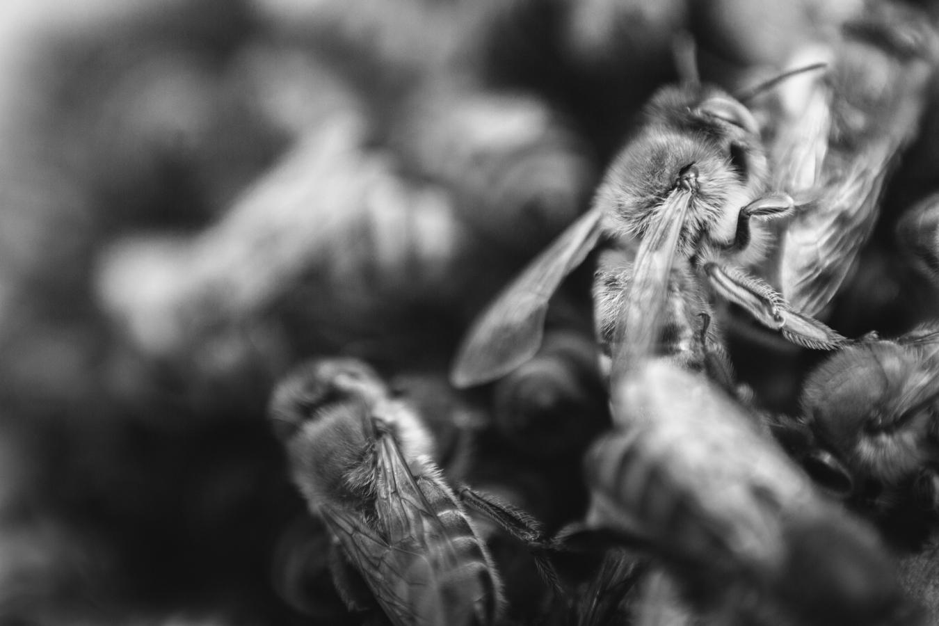 gl-bees-snakes-7543.jpg