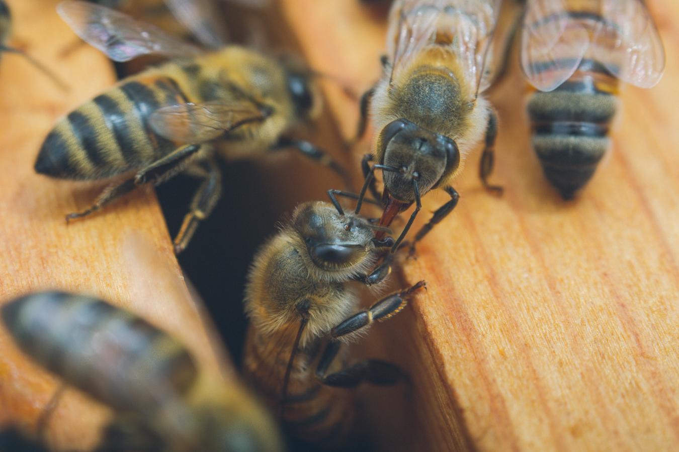 gl-bees-snakes-7595.jpg
