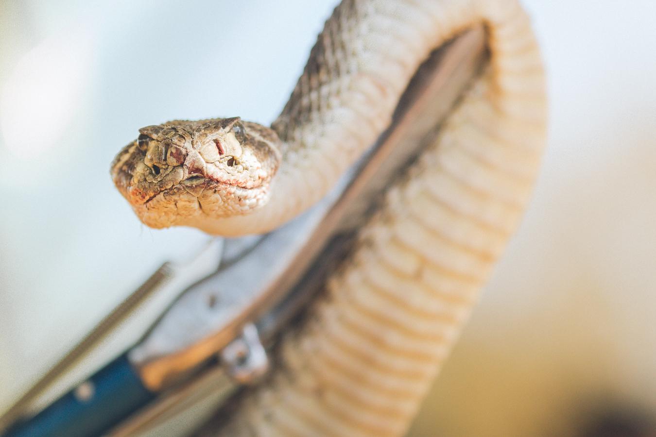 gl-bees-snakes-7704.jpg
