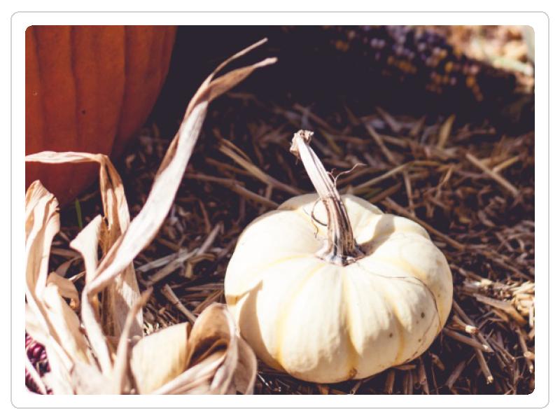 Fancy Pumpkin.png