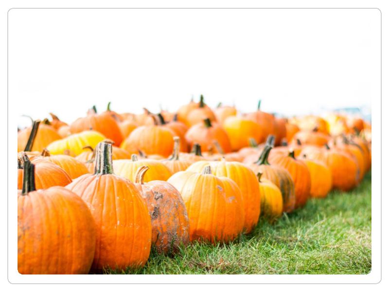 - Come find the perfect pumpkin!