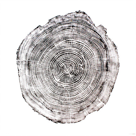 Cedar Wood Print black ink on white paper from Andre Mirzaian