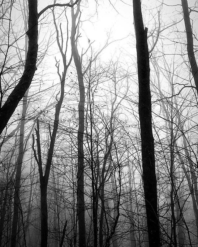 Monday's Misty Mountain 🐴 Ride | #nature