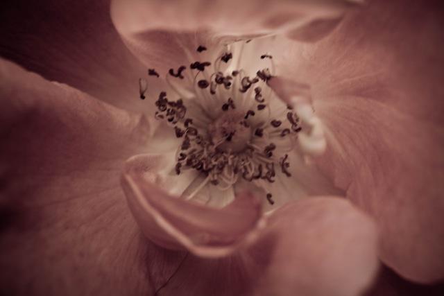 Belinda-Flower-photo-2.jpg