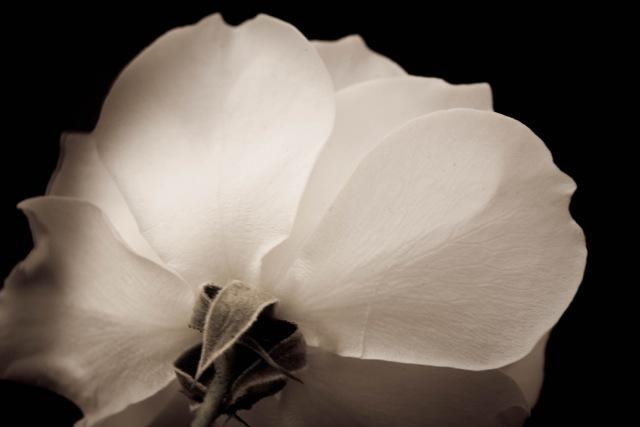 Belinda-Flower-photo-3.jpg