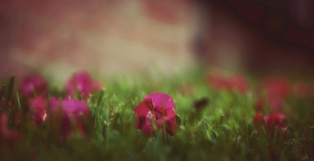 Belinda-flower-photo-5.jpg