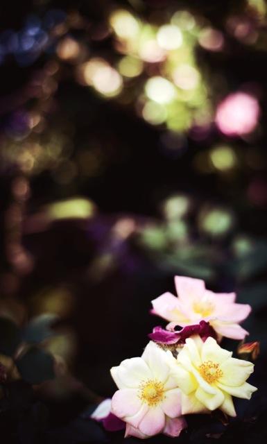 Belinda-Flower-photo-4.jpg