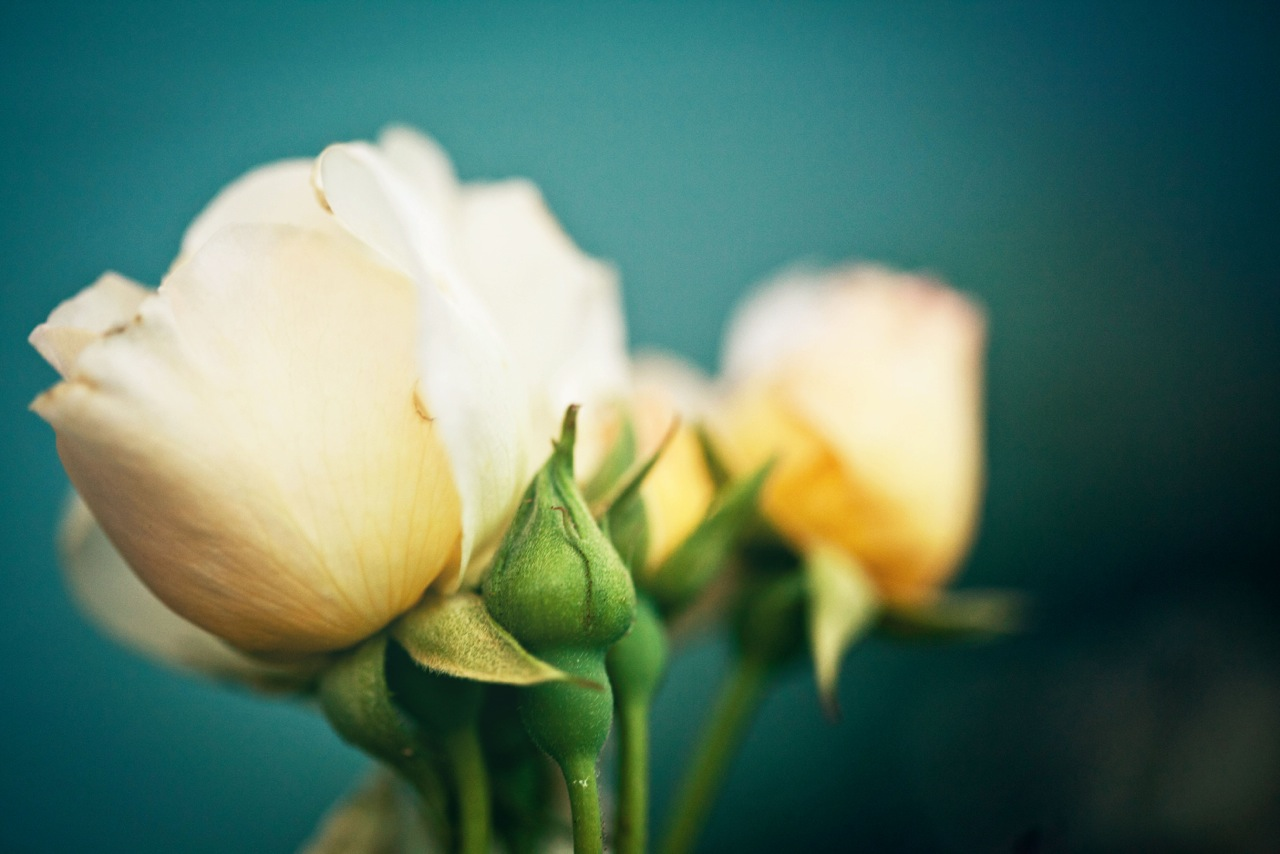 Belinda-Flower-photo-6.jpg
