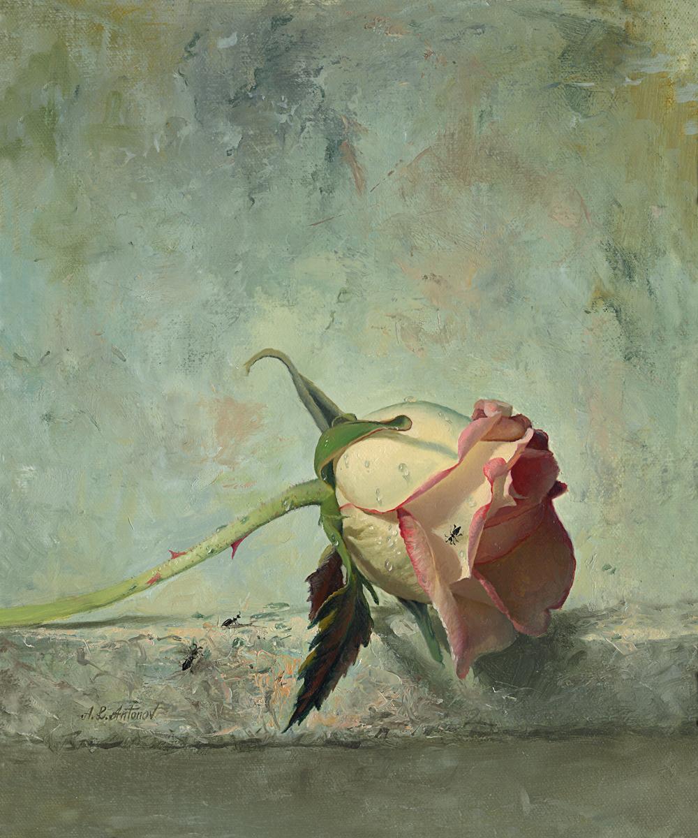 roza na svetlom.jpg