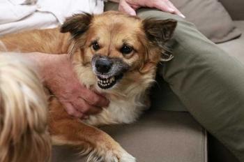 dog-protective-behavior.jpg