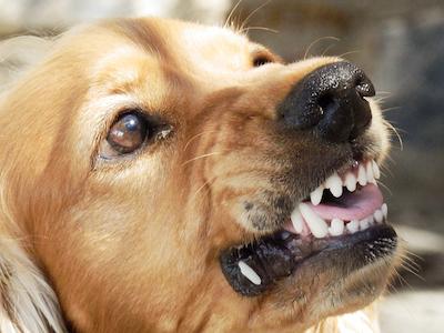 Dog Bite.jpg