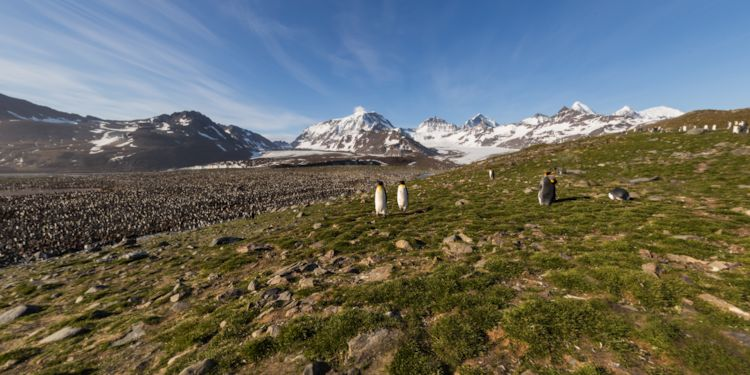 Overlooking the King Penguin Rookery
