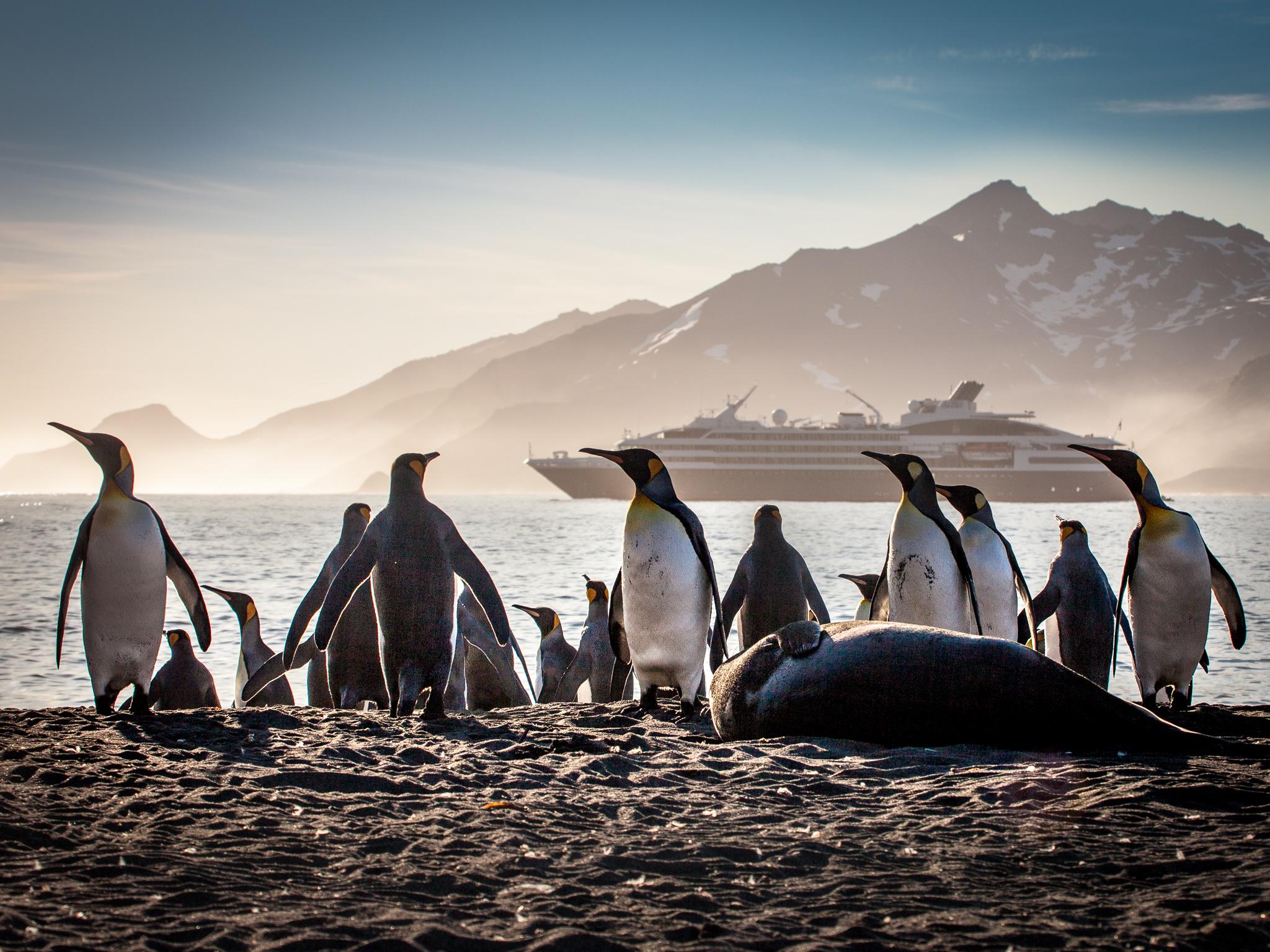 Penguins- St. Andrews  -  Kelly Redhead