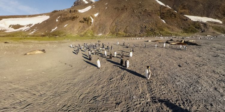 Penguins at the landing zone