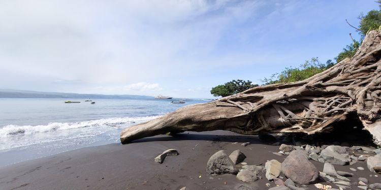 Tana Island - Fallen Tree & Canoe