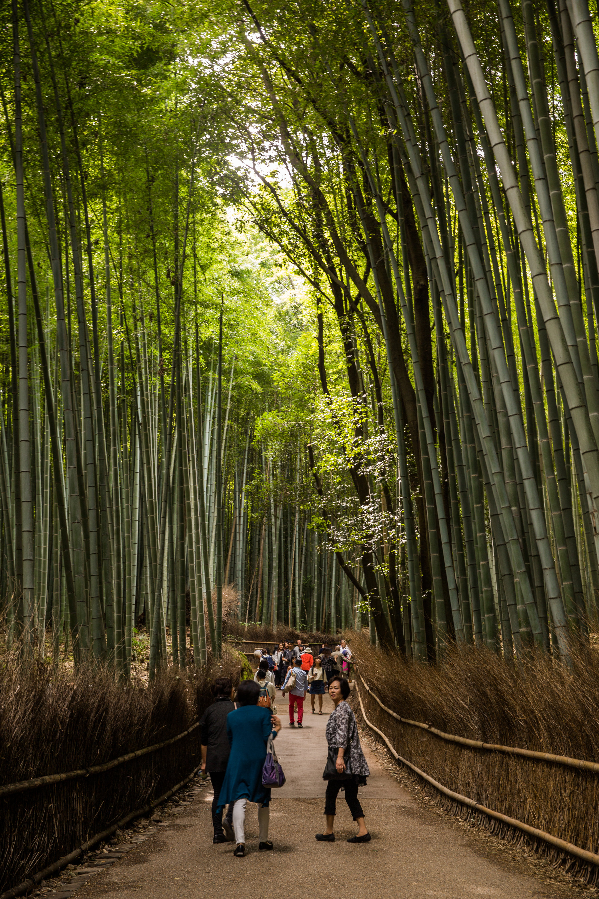 I disturb a discussion with my camera clicks as we enter the Arashiyama Bamboo Grove. Perhaps Canon is reading and wants me to go full frame mirrorless as an ambassador..