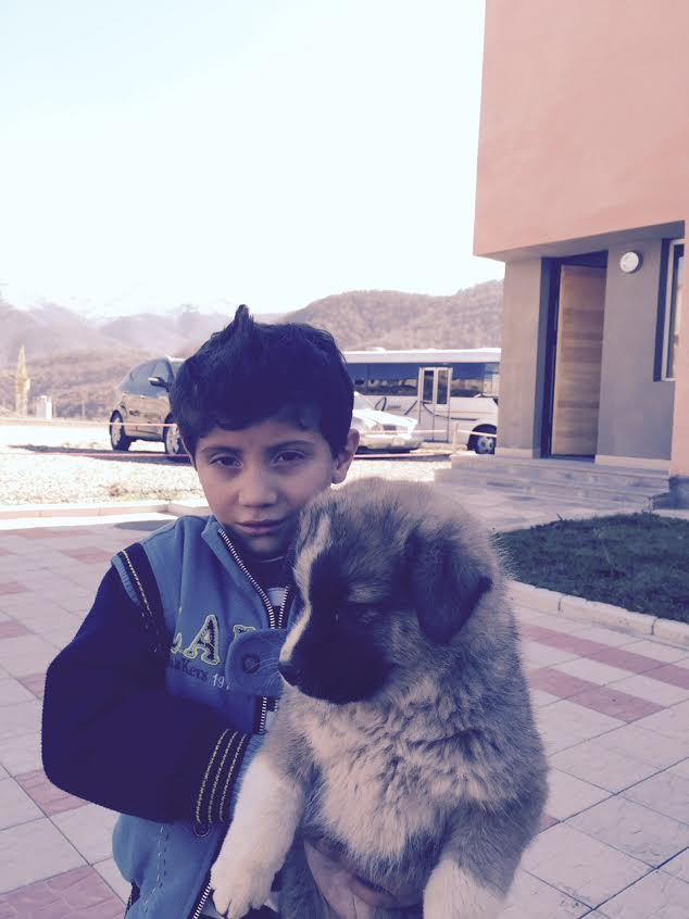 Garoushig, Ilona's youngest child with his new friend: an Armenian shepherd dog