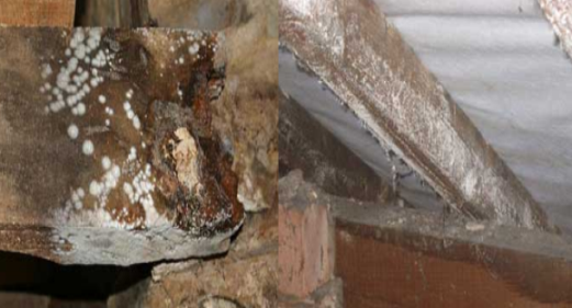 Garden Shed Care Preventing Damp And Removing Mould