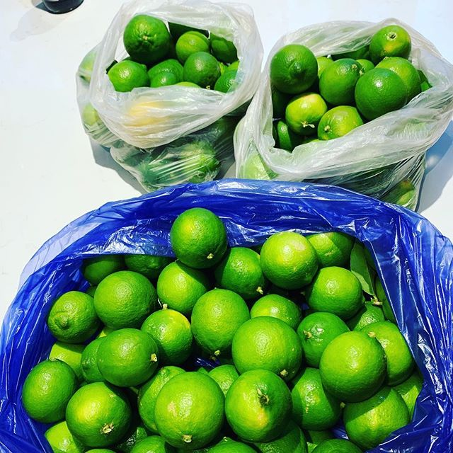 Drop in to our Chadstone office and pickup some fresh home grown limes. Plenty to go round! While stocks last. No T&Cs apply 😊🍋